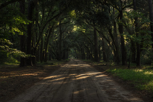 statepark road travel trees vacation forest nikon unitedstates southcarolina d750 dirtroad botanybay hdr edistoisland 1635mm photomatix