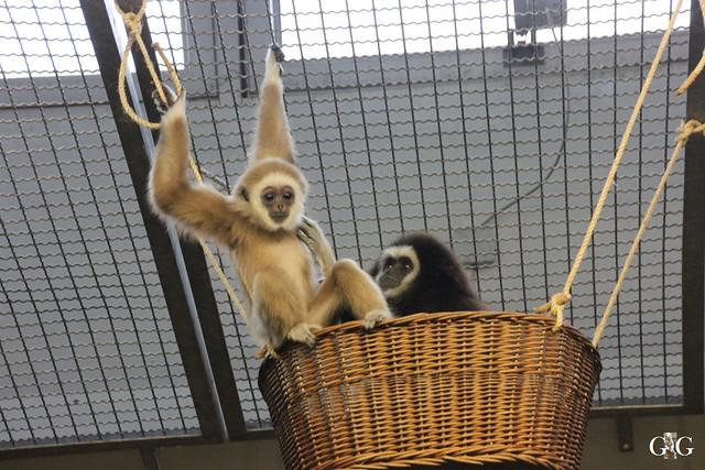 Besuch Tierpark Friedrichsfelde 14.02.201653