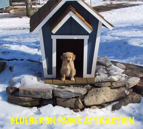 Paws is the Blueheron cover dog for April 2016.