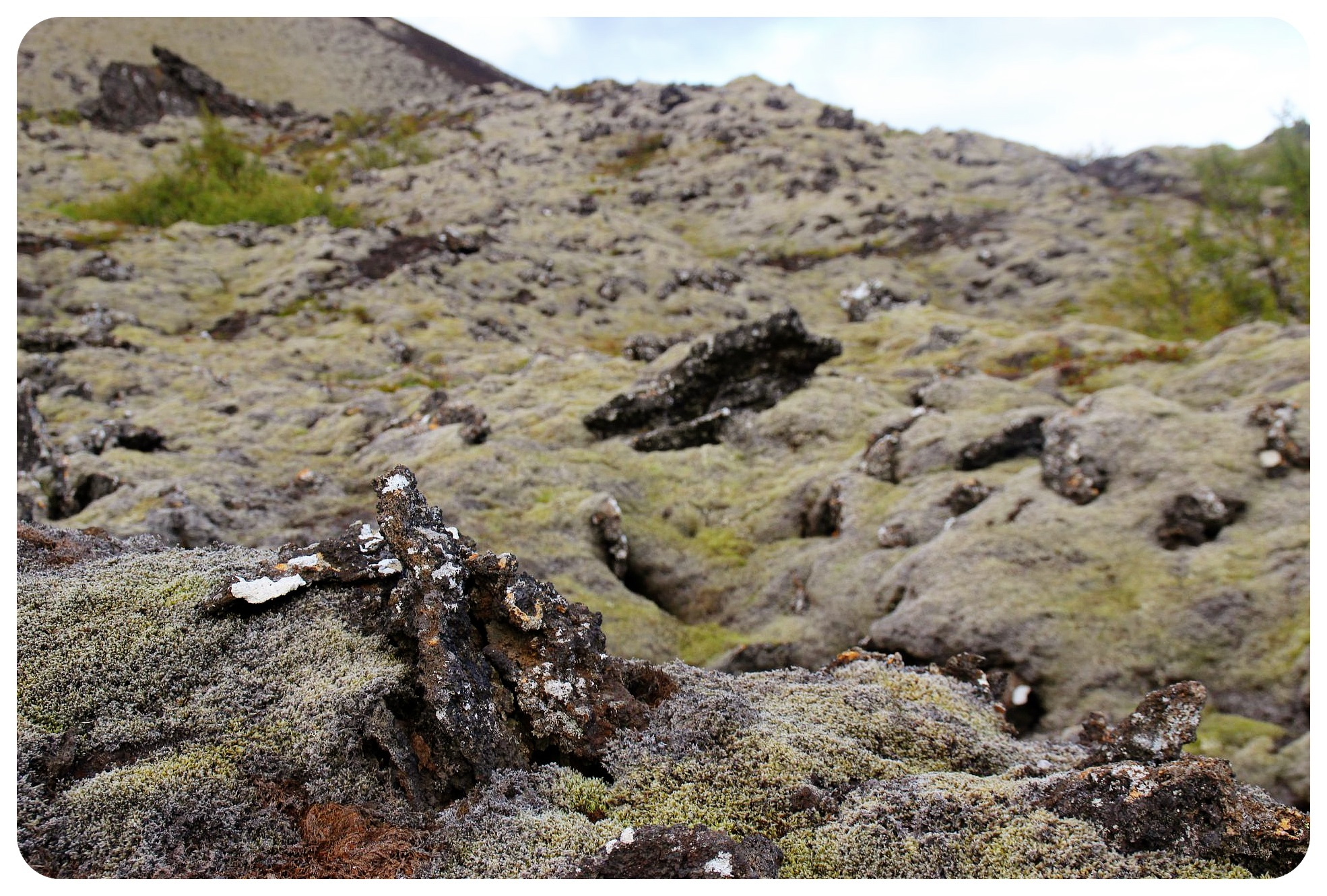 iceland moss covered volcanic rock