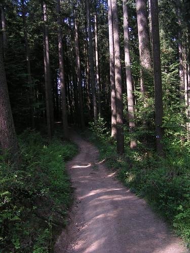 20080511 20875 0901 Jakobus Wald Weg