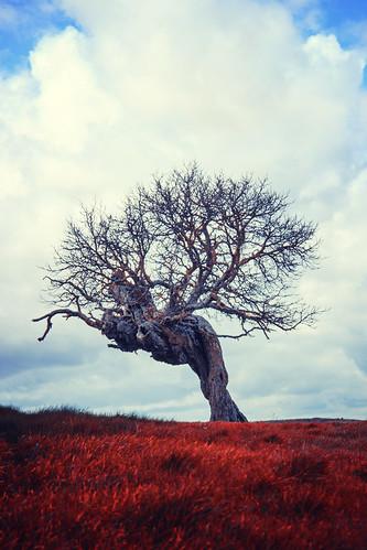 El árbol de los campos sangre