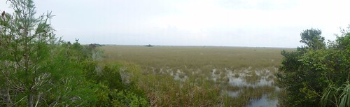Sea of sawgrass