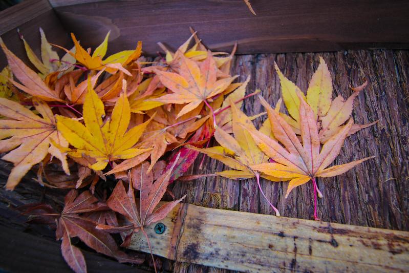 20141122-武奈ヶ岳&京都ライトアップ-0063.jpg