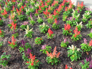 Flowers at King's Park