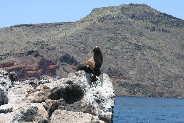 Galápagos-2016. León marino