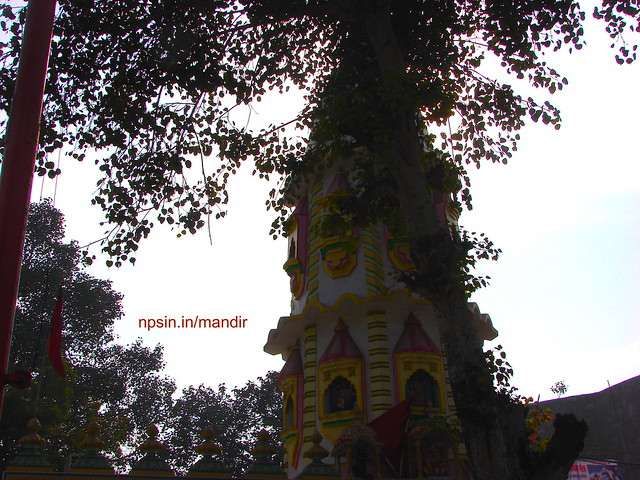 Temple Shikhar Surrounded with Greenery