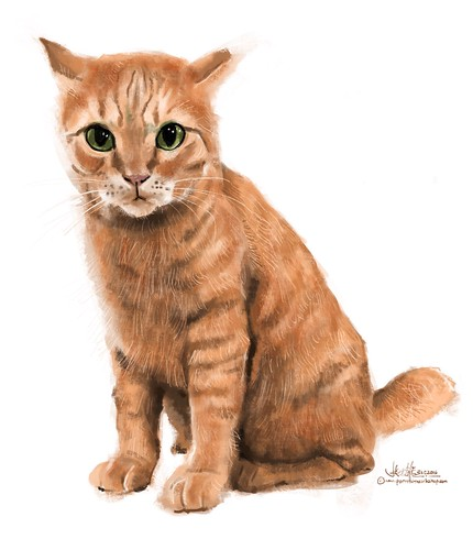"Digital Painting of ""Orange"" cat on iPad Pro + Apple Pencil + Procreate."