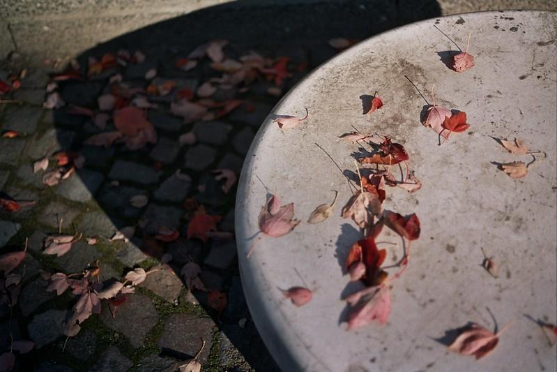 A golden Autumn day in Hamburg // Schorlemaedchen