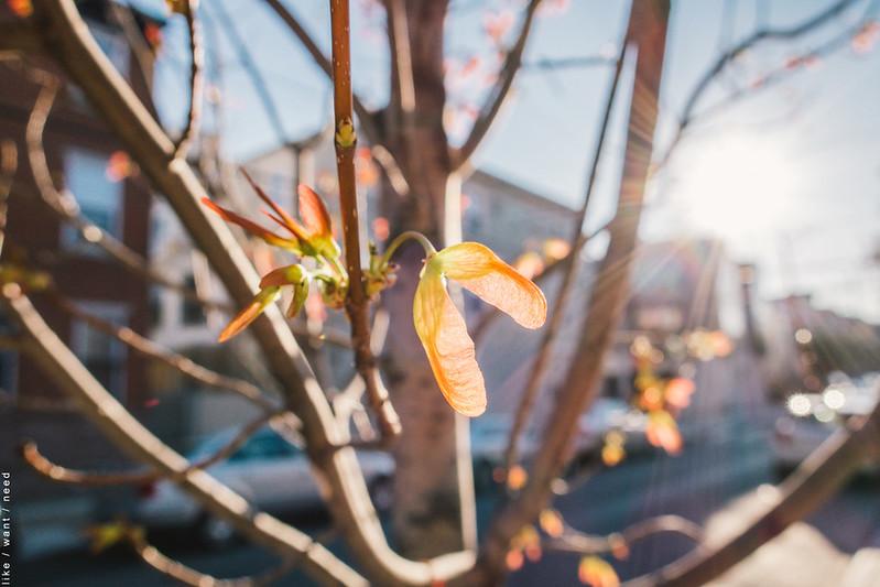 C'mon Spring!