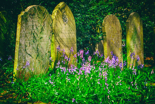 Bluebells at Southampton Old Cemetery