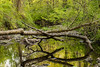 woodland2016-15.jpg
