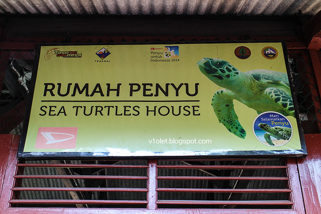 Pulau Pramuka Rumah Penyu1-9442rw