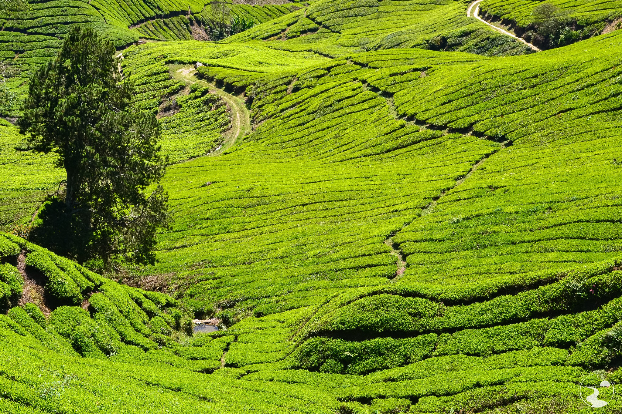 Plantaciones de te, Gunung Brinchan