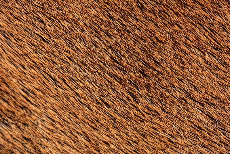 animal-fur-closeup-texturepalace-4