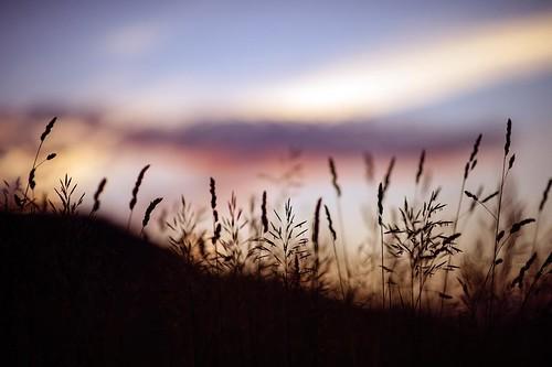 tourism nature landscape apsen aspencolorado danielkriegerphotography tourismboard