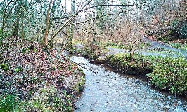 Stream in Clyne Valley Country Park