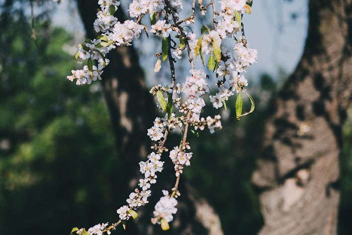 san_botanic13