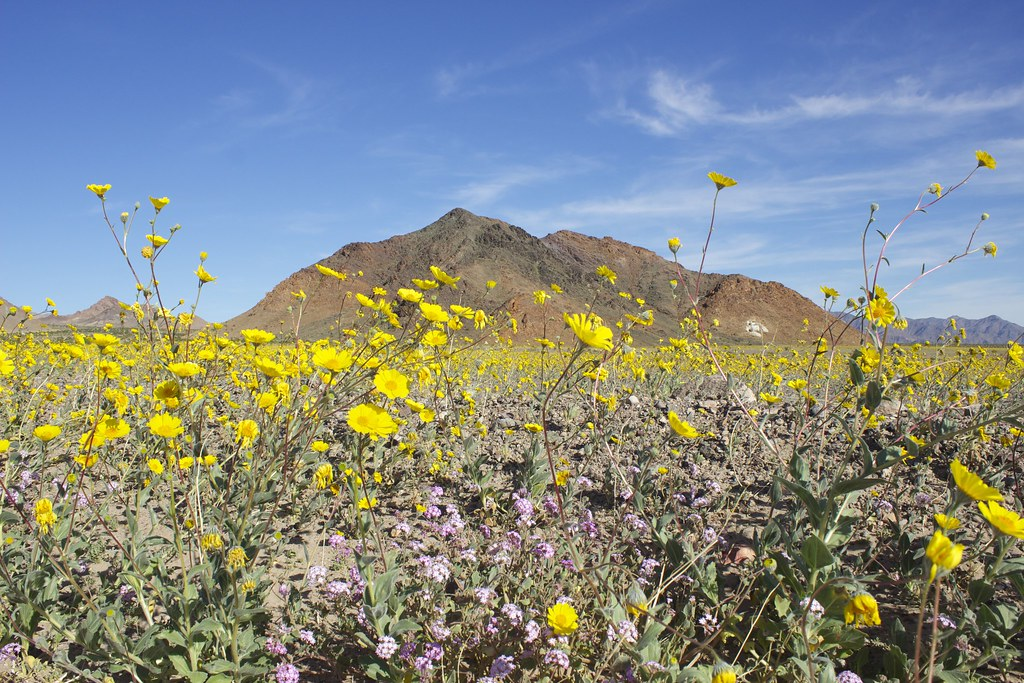 Photo of Death Valley Super Bloom