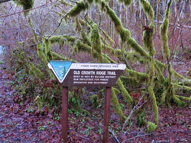 Old Growth Ridge Trailhead sign