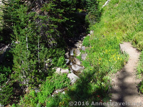 The trail after a bit of going downhill from Bonneville Pass, Shoshone National Forest, Wyoming