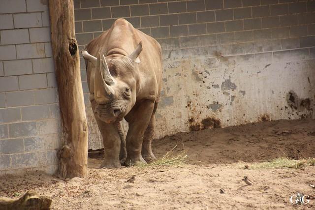 Frühlingstag im Zoo Berlin 03.04.201626