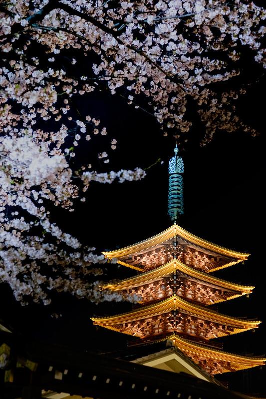 五重塔と夜桜