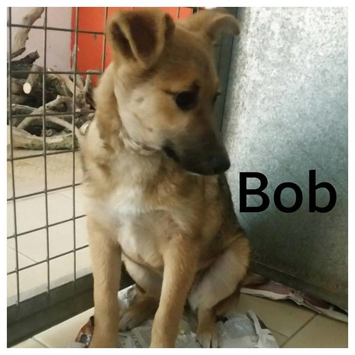 rubrica animali - Bob