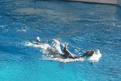 Coney Island, Brooklyn, NY - New York Aquarium - Sea Lion Show