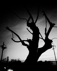 Shadows and Tall Trees - Day 087