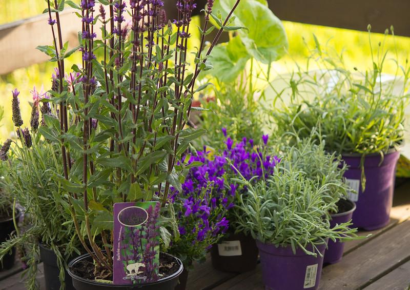 347 av 365 - Växter