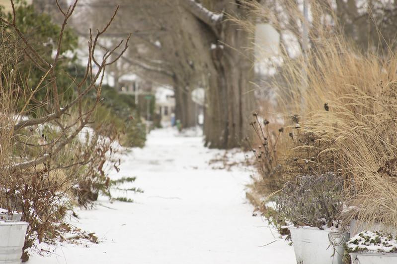 snowy front garden 1