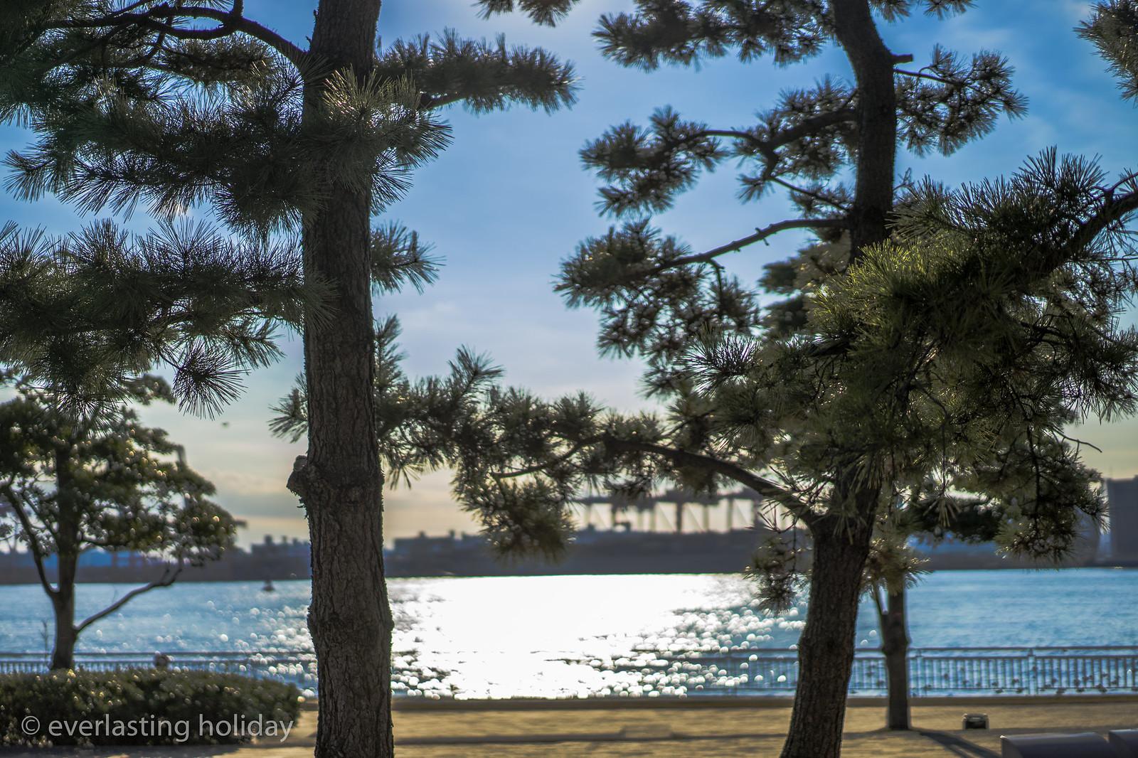 潮風公園 Shiokaze Park-0005