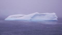 Góra lodowa z Pinwinami