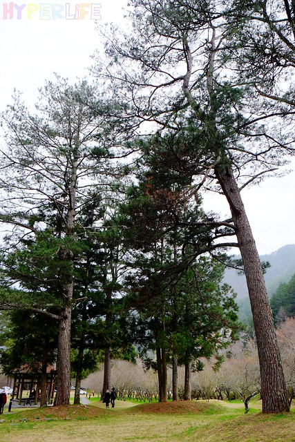 合歡山&武陵農場 (43)