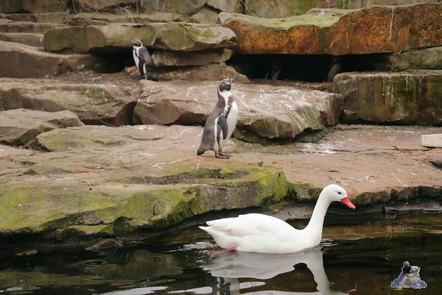 Zoo Berlin 11.03.2016   067