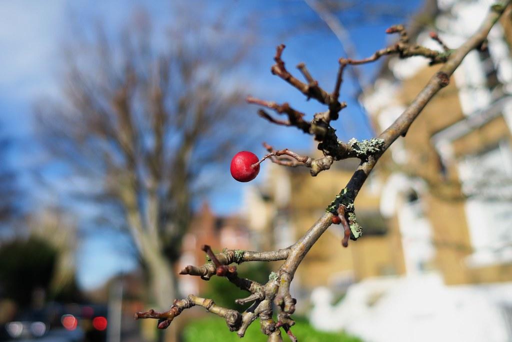 English Garden Macro