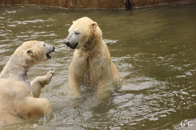 Wasserspaß für Tonja+Wolodja Tierpark 06.03.201629