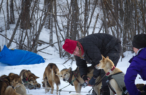 2016 Iditarod: Galena