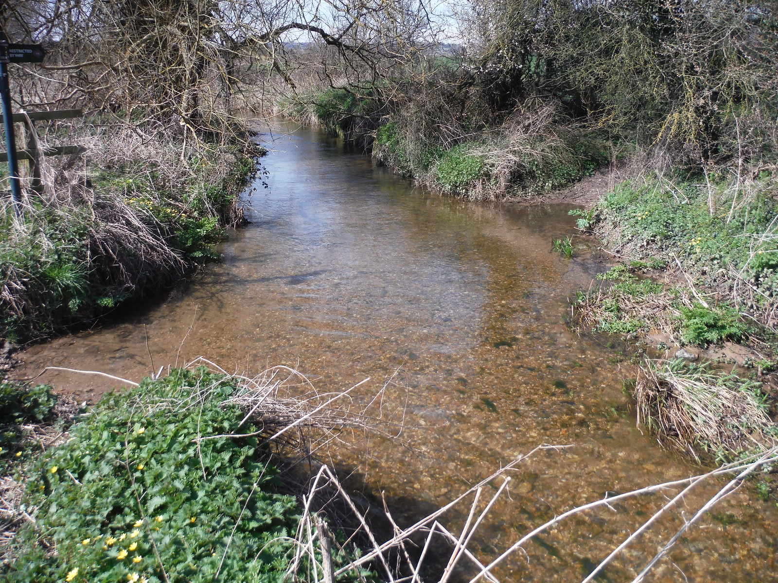 The River Pang SWC Walk 260 Aldermaston to Woolhampton [Midgham Station] (via Frilsham)