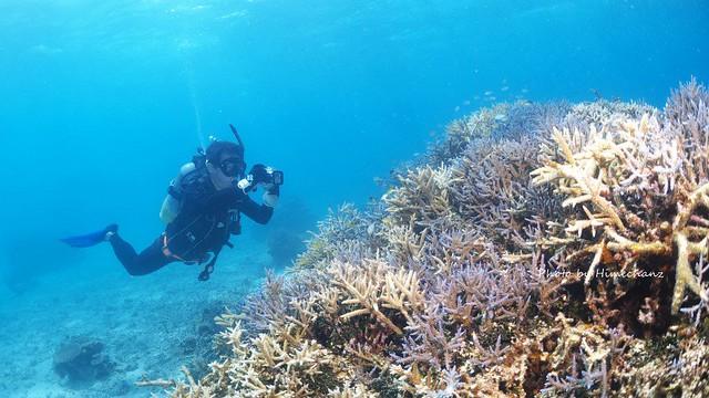 サンゴもすんごいキレイでしたね!!!