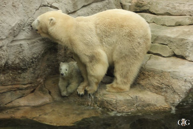 Zoo Bremerhaven 09.04.16 2.Teil80