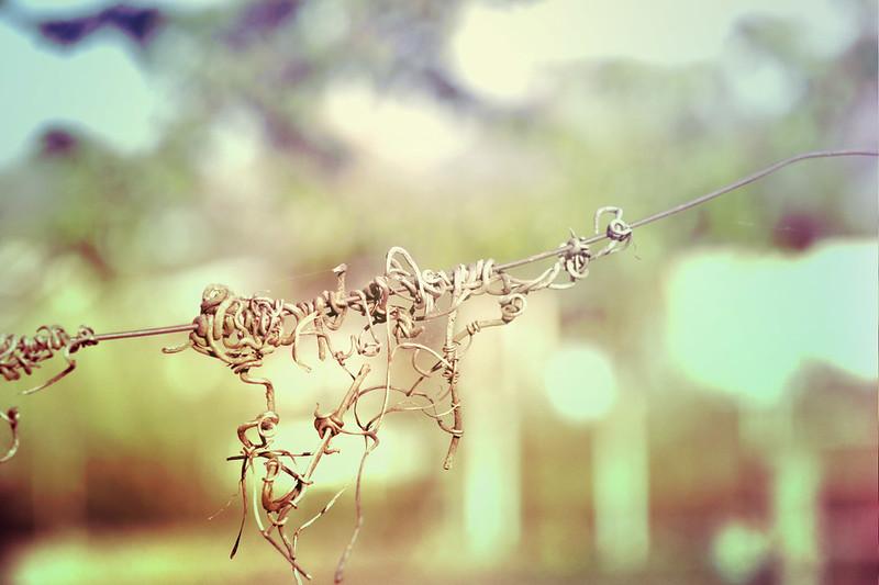 blur-dreamy-texture-texturepalace-84