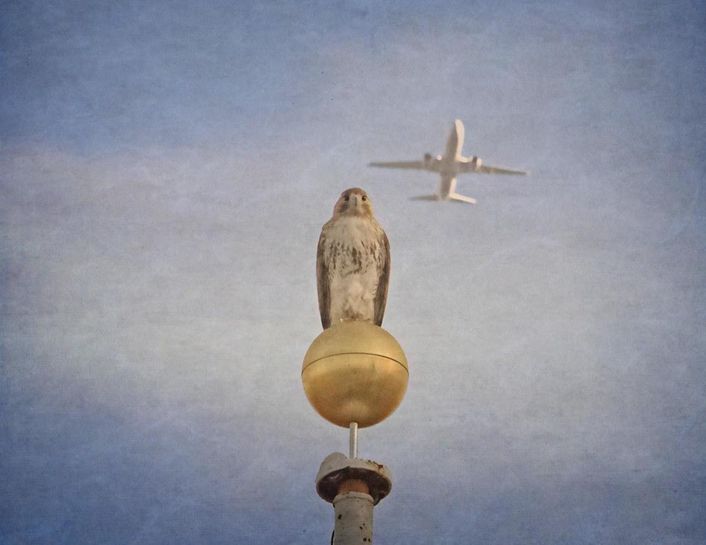 Christo, king of the sky
