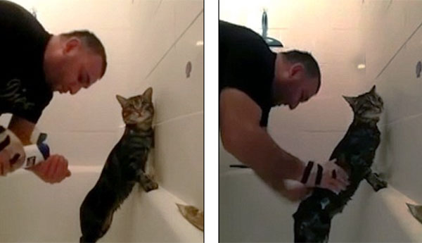 cat-enjoys-shower