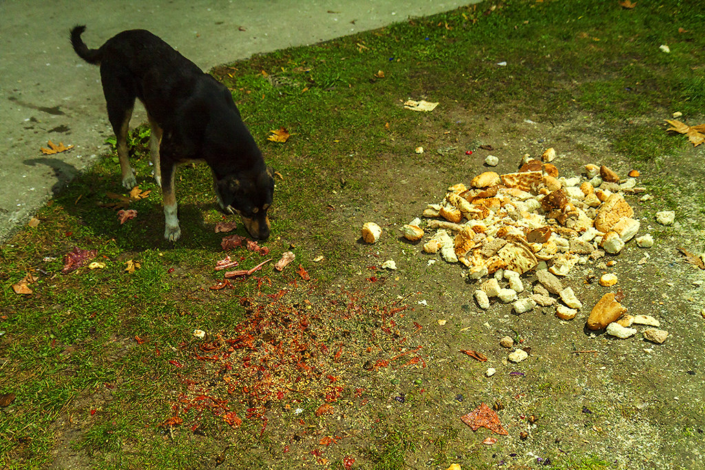 Dog eating scraps in park--Istanbul
