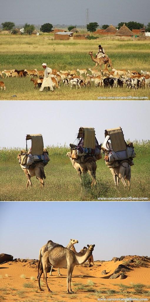 Africa080