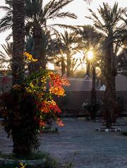 Maroc,Zagora jardin