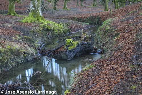 Parque Natural de Gorbeia  #DePaseoConLarri #Flickr -3074