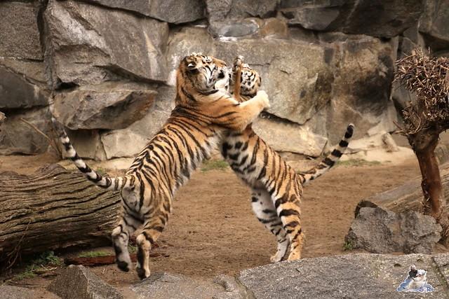 Tierpark Berlin 25.03.2016  0169